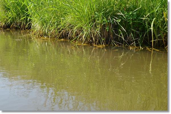 小川の水辺