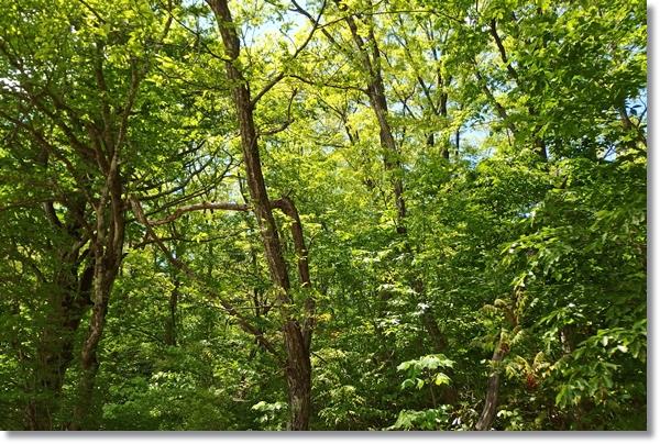 広葉樹林の間から見える青空