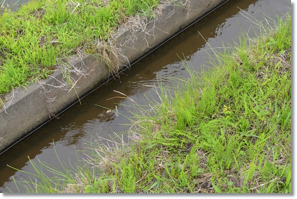 U字溝の水路