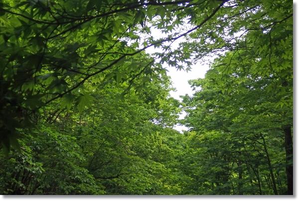 緑の木々に覆われた谷間