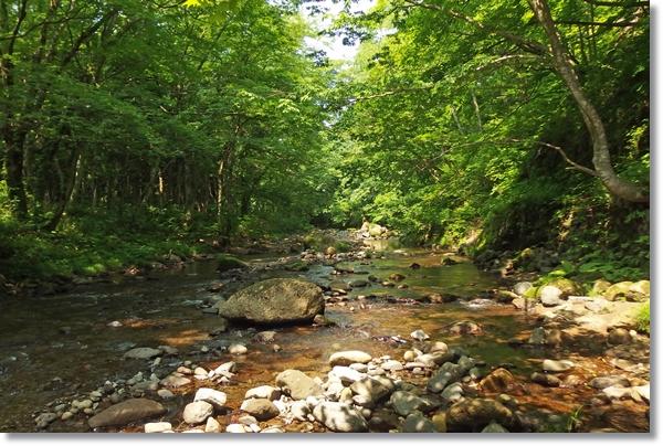 林間を流れる瀬