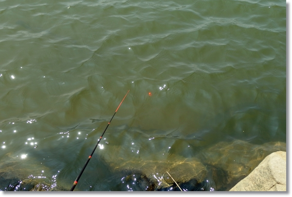 釣り竿と水面に浮いた玉ウキ
