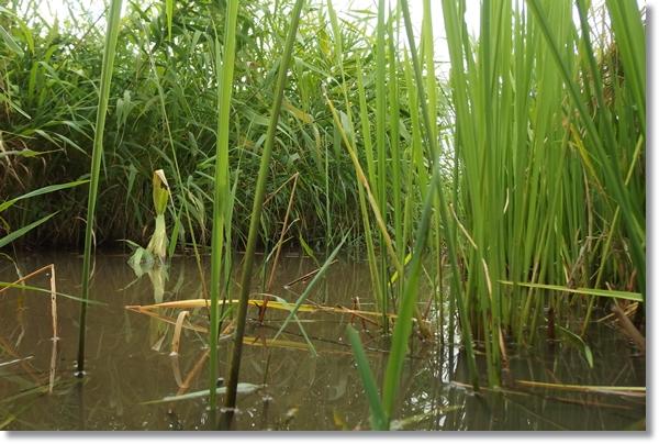 水生植物が繁茂する小川