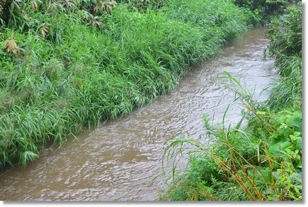 増水した小川