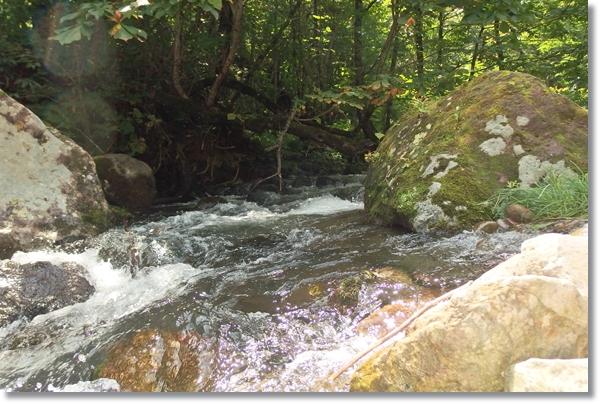 増水してささ濁り渓流の流れ