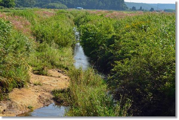 ボサの中を流れる小河川