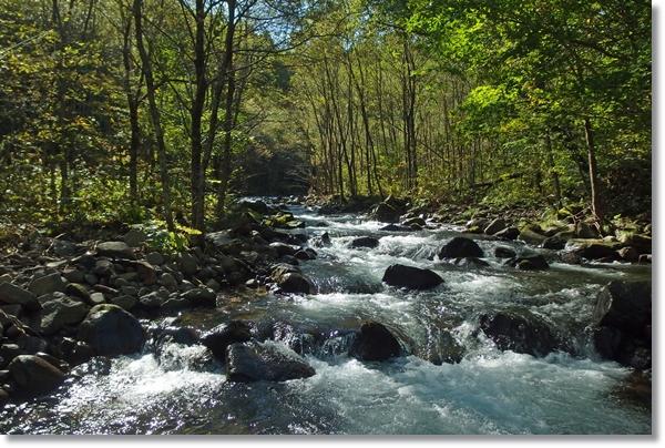秋晴れの中、林間を流れる渓流
