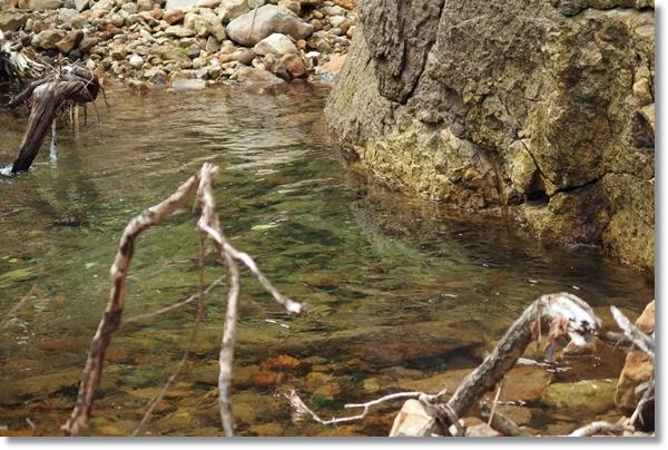 遠くに見える川の中に定位する大イワナ