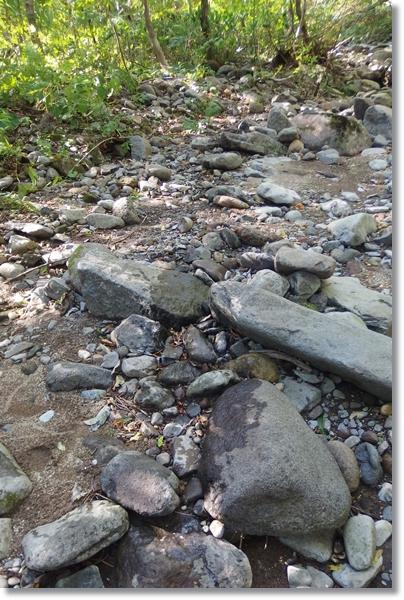 熊が通って濡れた川岸の石