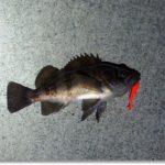 メバル釣りの難しい季節