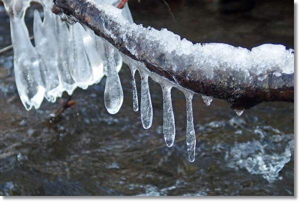 水辺の枝に付着した氷柱