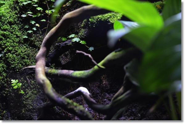 ビバリウム内の流木とその周りに生えた苔類