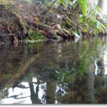 雨の中の水辺調査