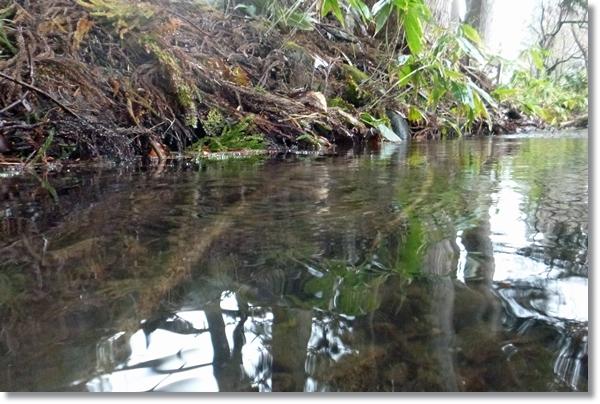 山野を流れる小川の水辺風景