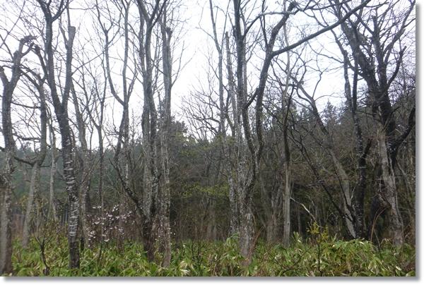 葉を落とした雑木林と地面を覆う笹
