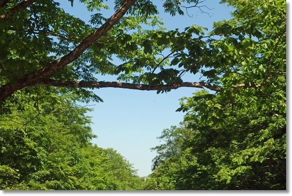 新緑の木々の間から見える春の青空