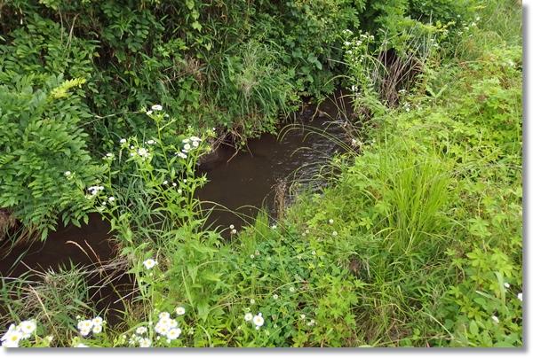 草木に覆われた小川の流れ