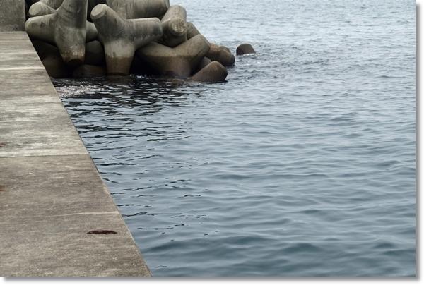 宮城県南三陸町の漁港の防波堤