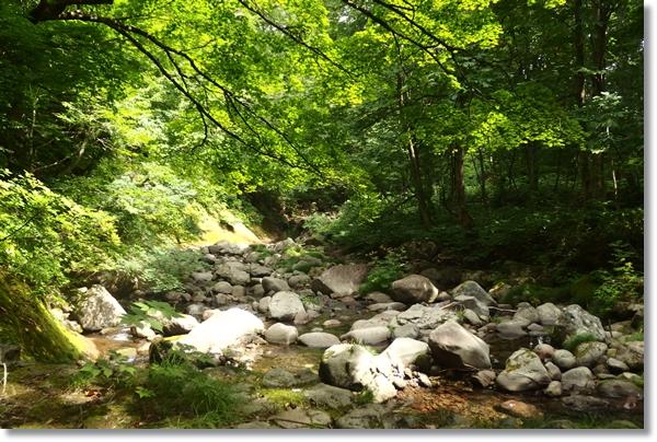 林間の渇水した流れ