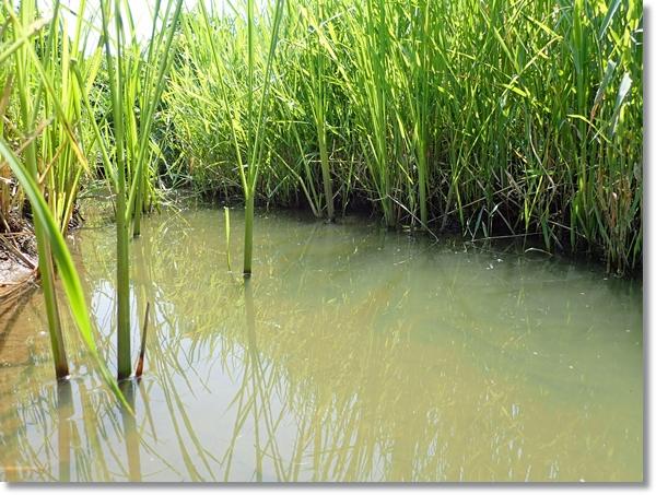 雨が降らず減水した田んぼの用水路