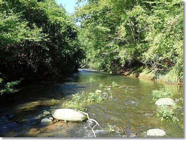増水気味の里川