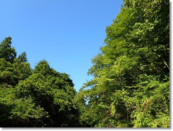 林から見た台風一過の青空