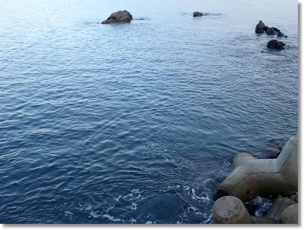 南三陸の漁港から眺めた海