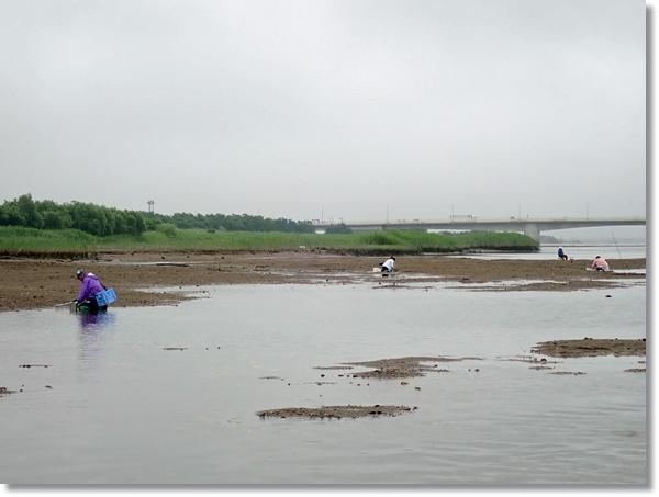 名取川でシジミガイを獲る風景