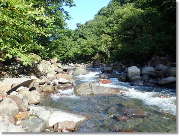緑の中を流れる夏の澄川の流れ