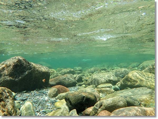 澄川の透き通った水