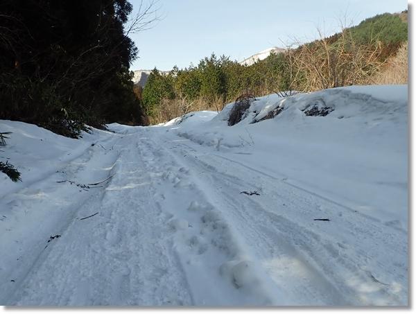 泉ヶ岳に向かう早春の雪深い林道