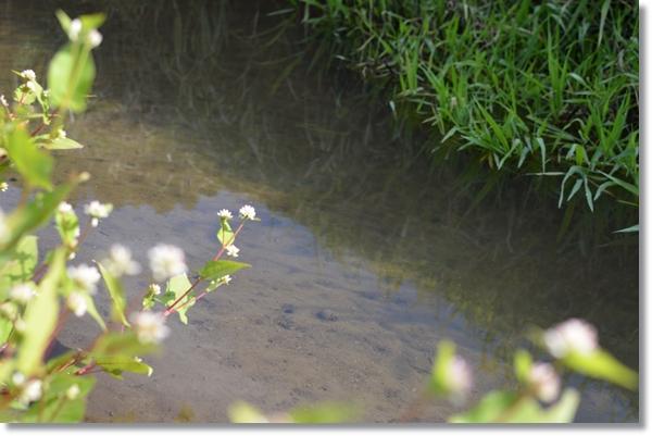 底が見える透き通った流れの小川
