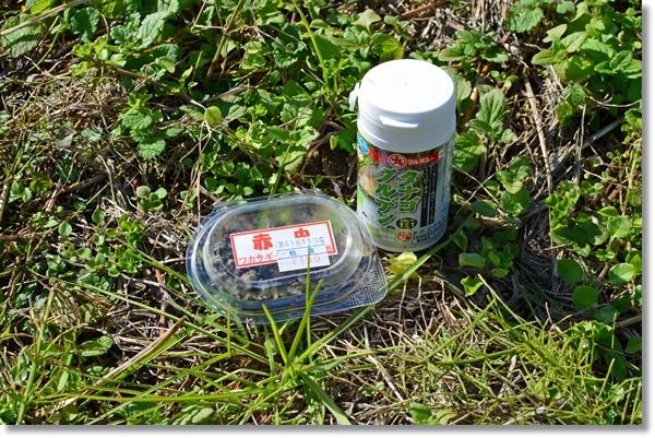 地面に置いたタナゴグルテンと赤虫