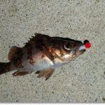 渓魚を諦めて奥松島~塩釜