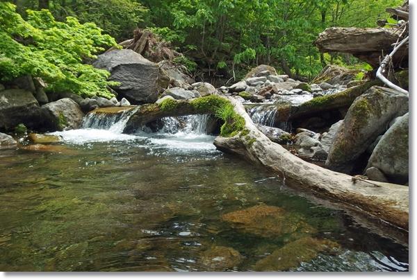 澄んだ谷川の流れ