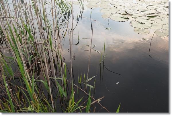 水生植物が生える溜池