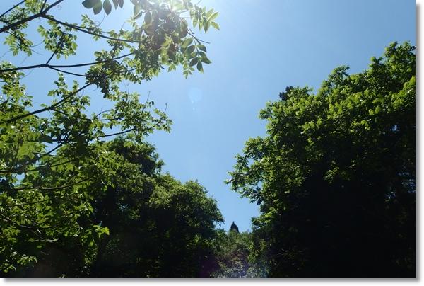 林間の青空