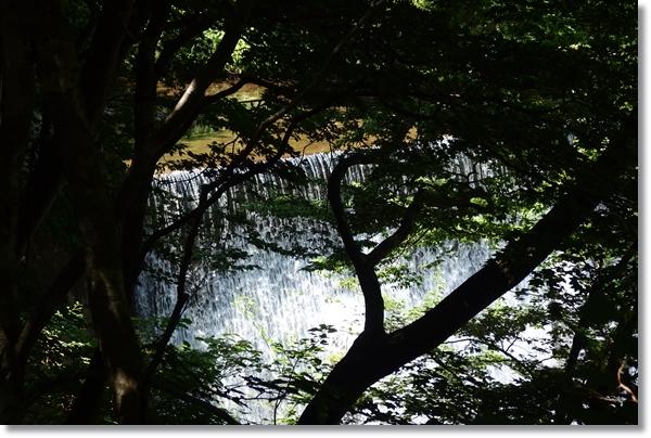 木々の間から見下ろした堰堤