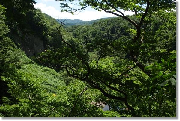 木々に囲まれた谷底に見える流れ