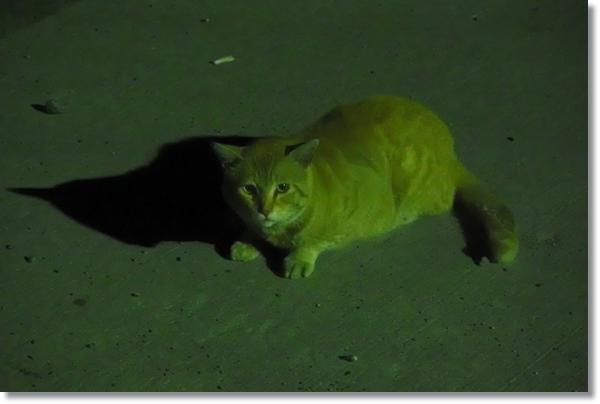 暗闇で座り込む猫