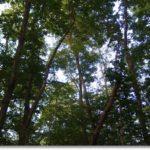 夕暮れの雑木林