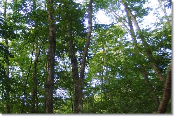 薄暗い雑木林の中