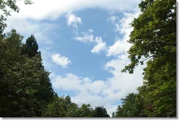山の中から見上げた青空