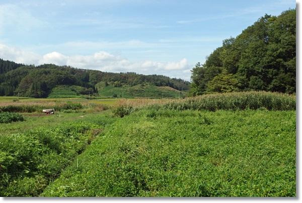 山間部の農地