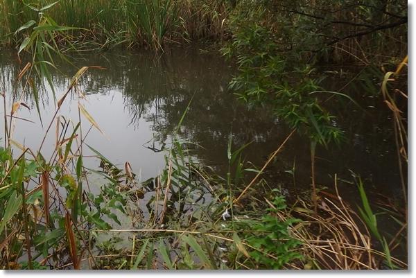 湿地帯の中の池