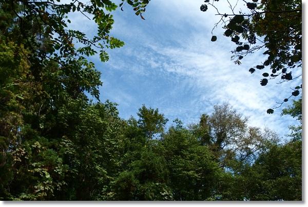 山の中から見上げた秋晴れの空