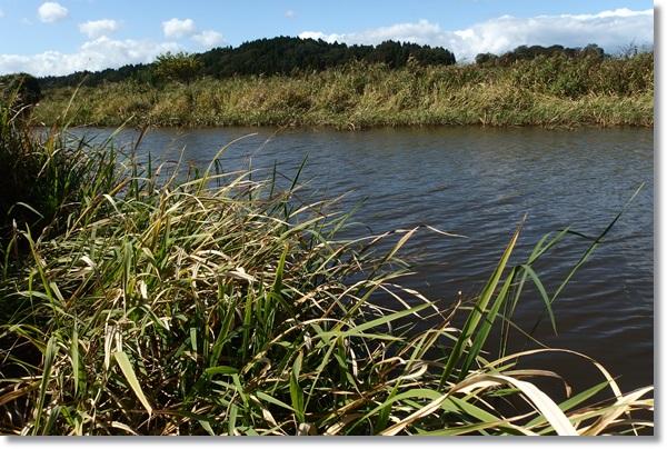 水辺が草に覆われた池