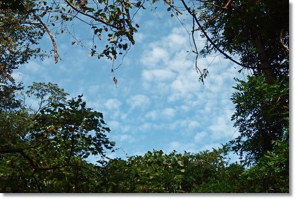 木々の間から見える青空