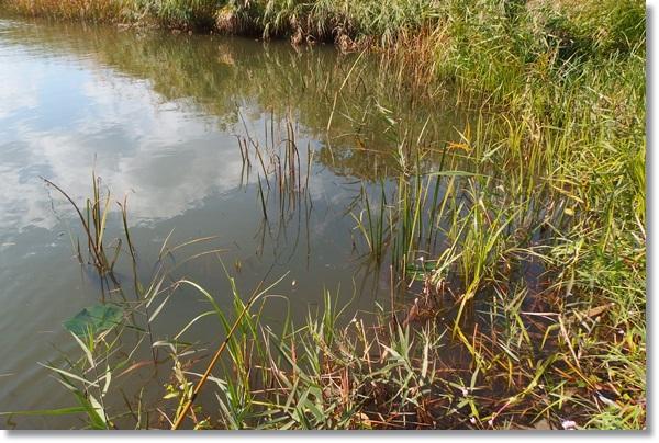 植物が生い茂る水辺