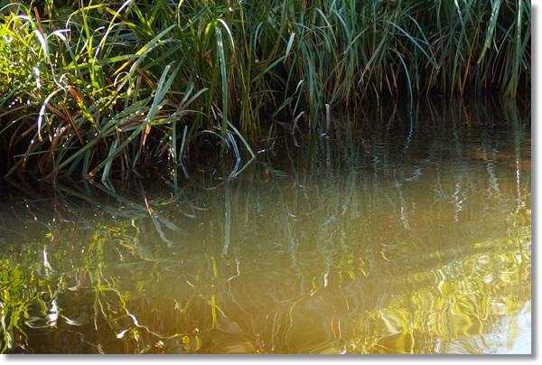 草が生い茂る水辺